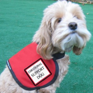 "Image of a small dog wearing a harness with a tag called ""emotional support dog."""